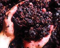 Adición de Taninos al Vino