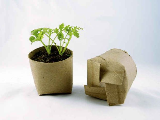 biodegradable ©buzzfeed.com