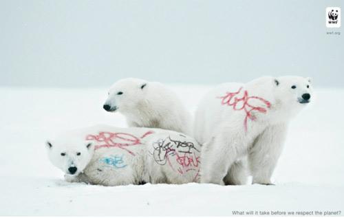 Osos polares ©WWF