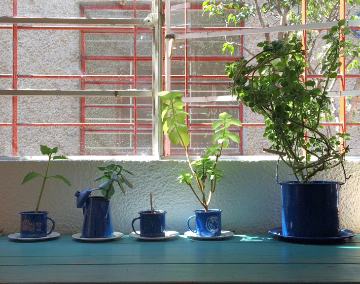 TB-plantas