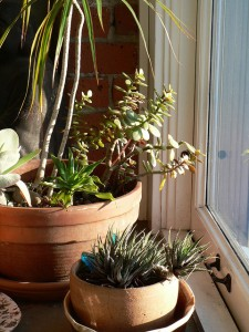 TB-plants