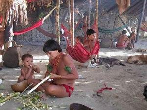 Tb-Yanomami
